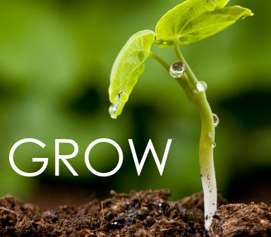 sprout_in_dirt_square